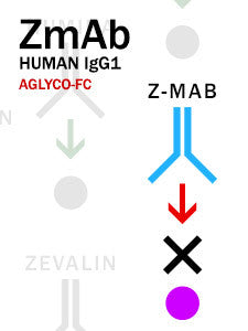 Z-MAB – Human IgG1 with aglyco-Fc