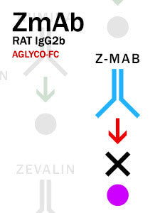 Z-MAB – Rat IgG2b with aglyco-Fc