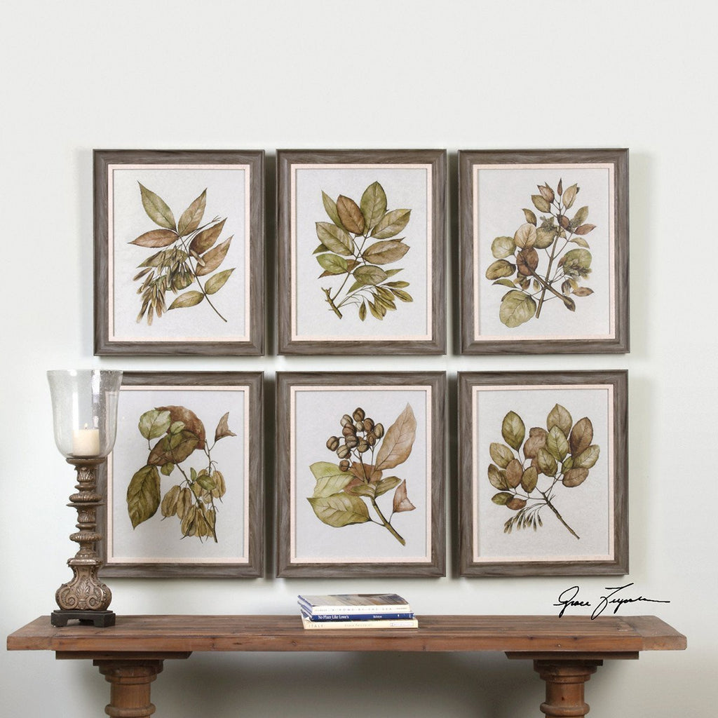 Uttermost Seedlings Artwork Set of 6