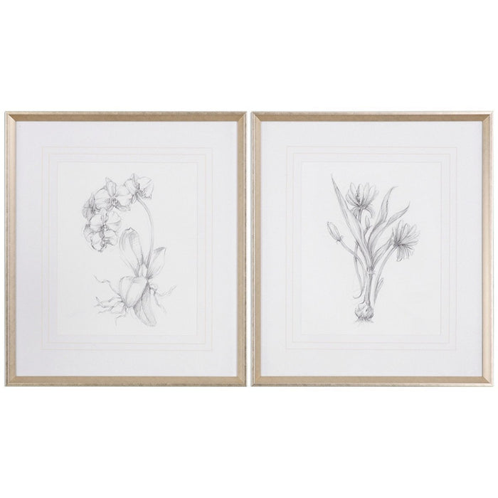 Uttermost Botanical Sketches Artwork Set of 2