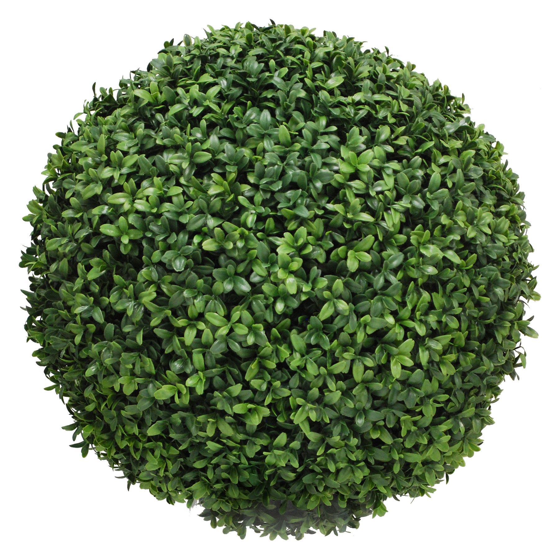 BOXWOOD BALL 20""