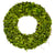 PRESERVED SINGLE SIDE BOXWOOD WREATH 20""