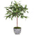 lush green single stem eucalyptus plant in classic white and blue ceramic pot