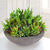 SUCCULENTS BOWL LARGE (WHD064-GR) - Winward Home faux floral arrangements