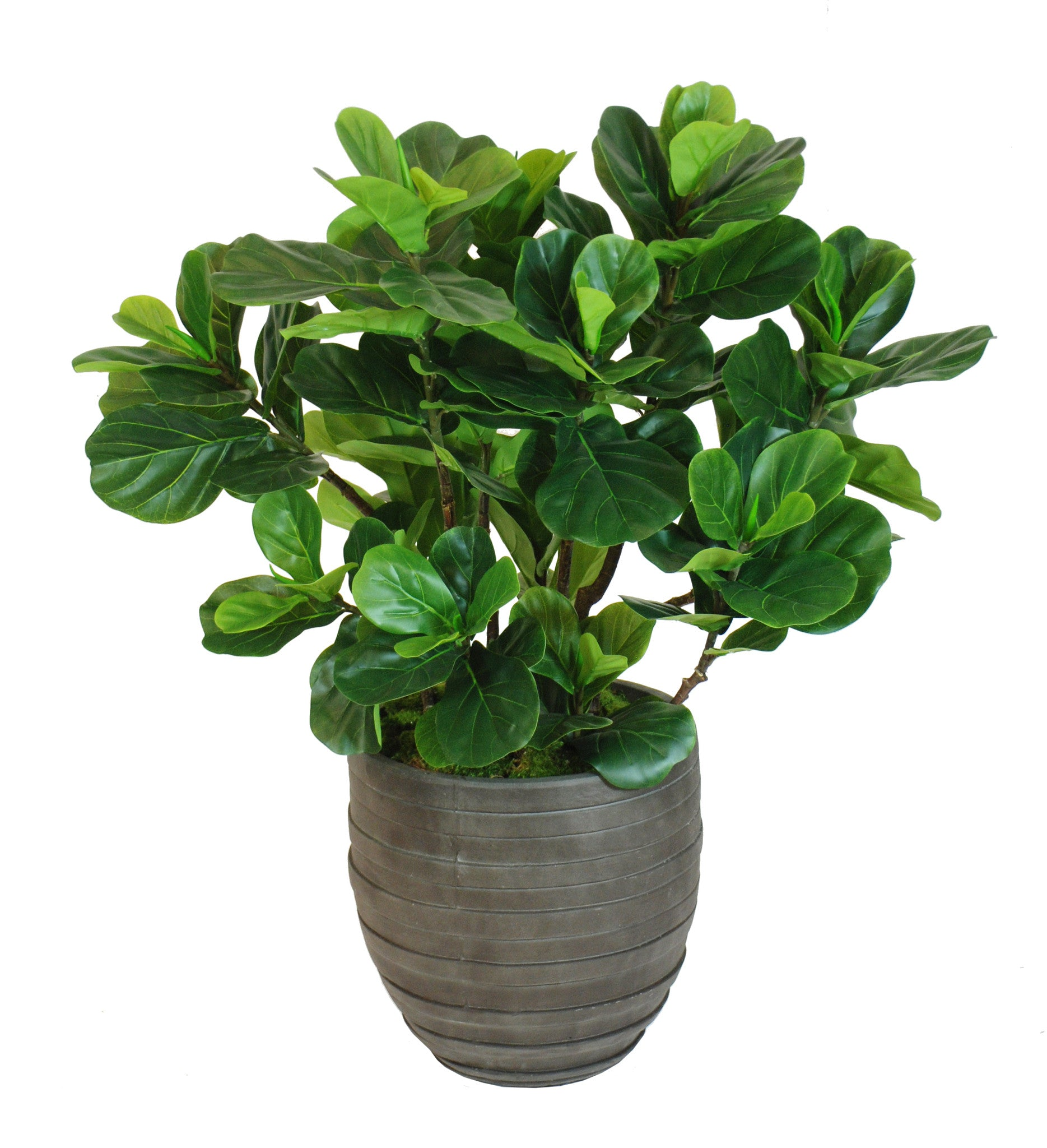 FIDDLE LEAF FIG TREE SMALL (WHD095 GR)   Winward Home Faux Floral  Arrangements