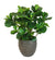 FIDDLE LEAF FIG TREE SMALL (WHD095-GR) - Winward Home faux floral arrangements