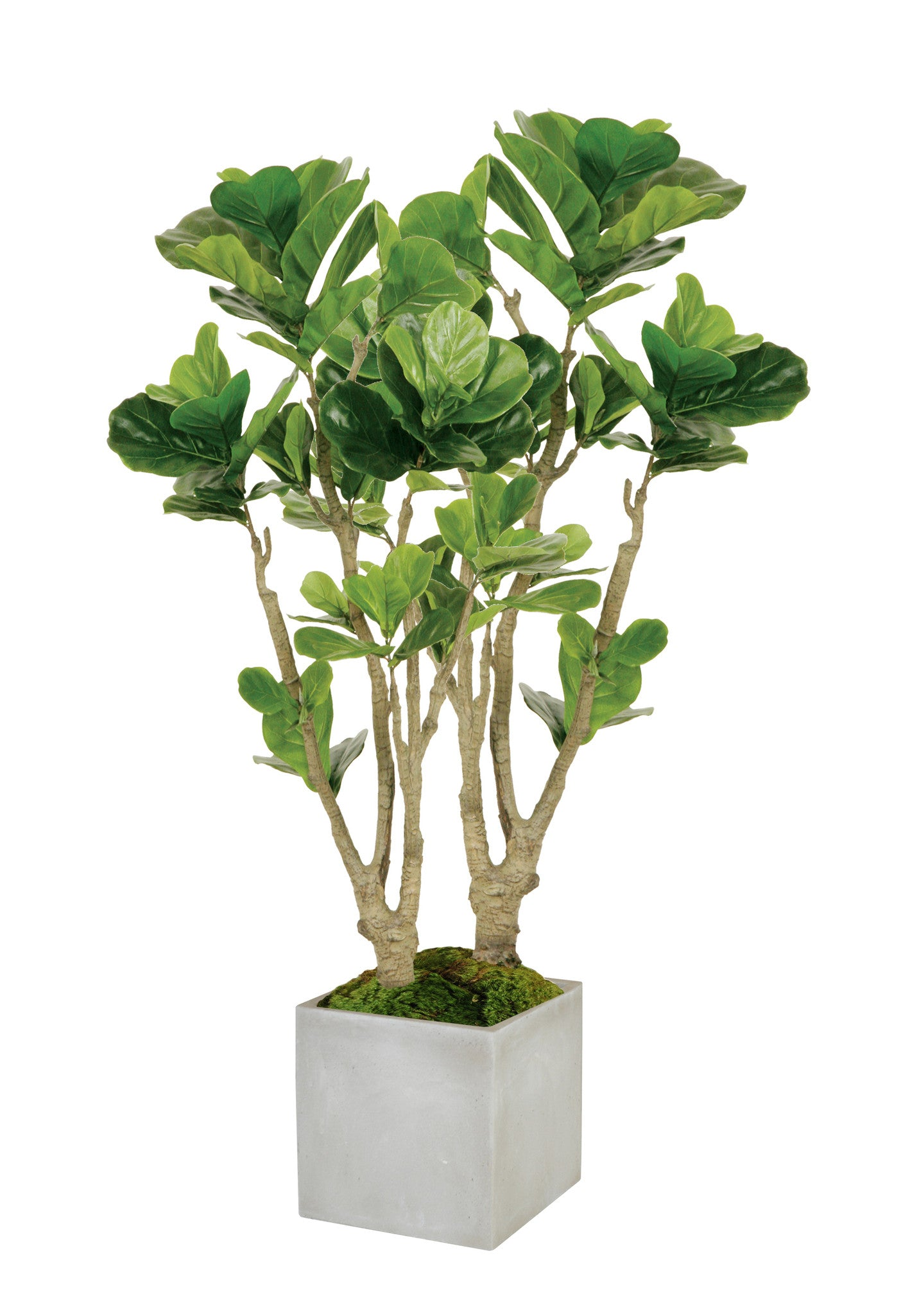 FIDDLE LEAF FIG TREE MEDIUM (WHD112-GR) - Winward Home faux floral arrangements