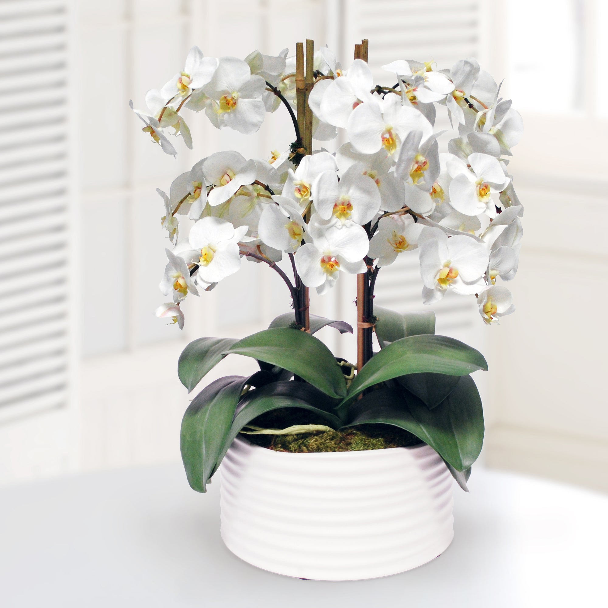 ORCHID IN URBAN COIL PLANTER 13""