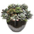 MIX SUCCULENT IN CRETE BOWL 15""