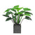 POINTED PHILO PLANTER 3.3'
