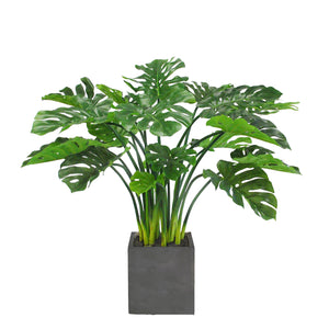 SPLIT LEAF PHILO PLANTER 3.7'