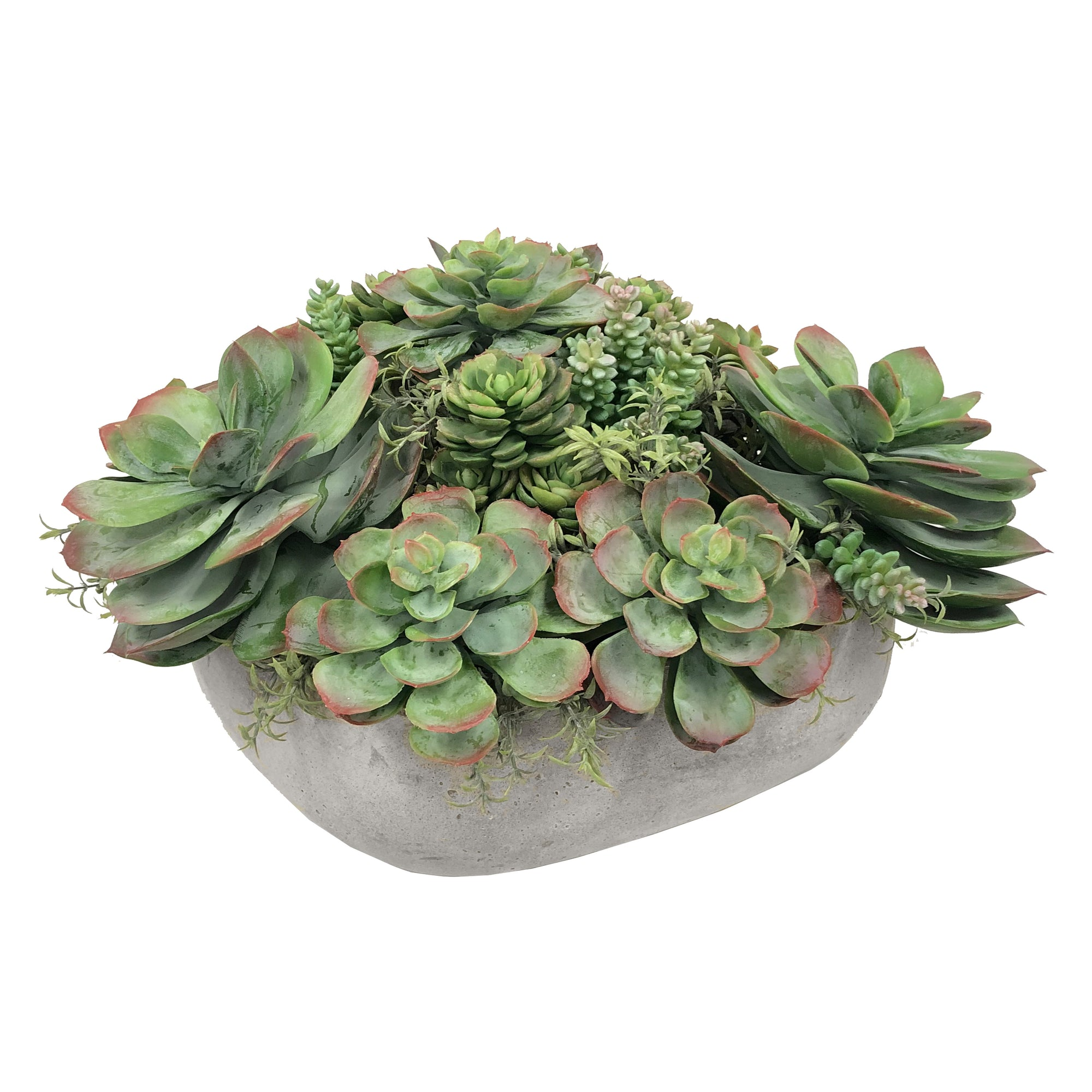 MIX SUCCULENT IN CASUAL TRAY 11.5''