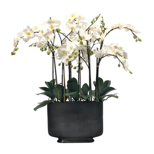 ORCHID IN RECTANGLE VASE 35""