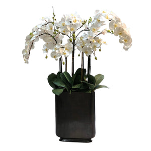ORCHID IN RECTANGLE VASE 42""
