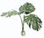 TRI GIANT PHILODENDRON IN VASE 43""