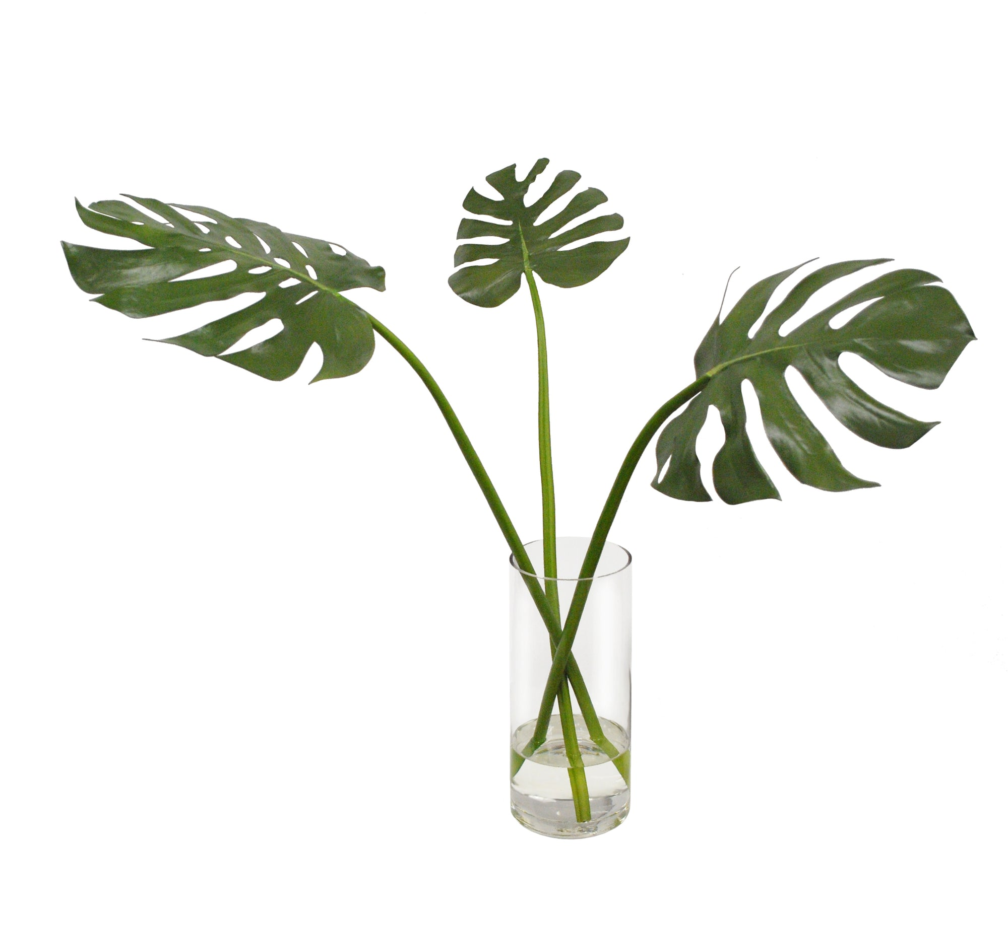 TRI MONSTERA IN VASE 29""
