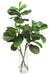 FIDDLE LEAF IN VASE 41""