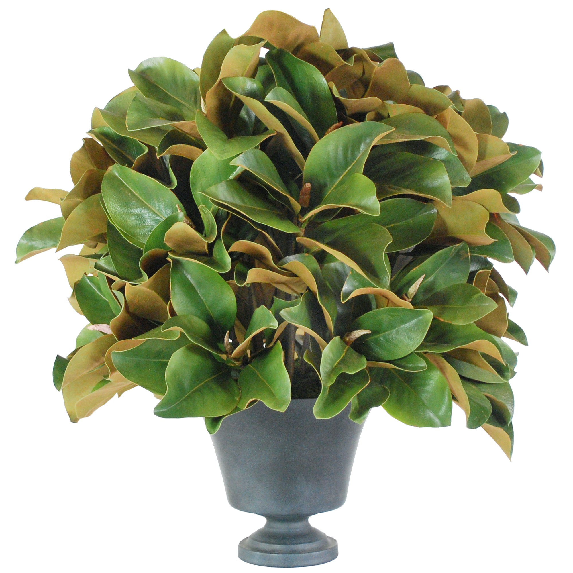 MAGNOLIA IN CONSERVATORY PLANTER (WHD285-GR)