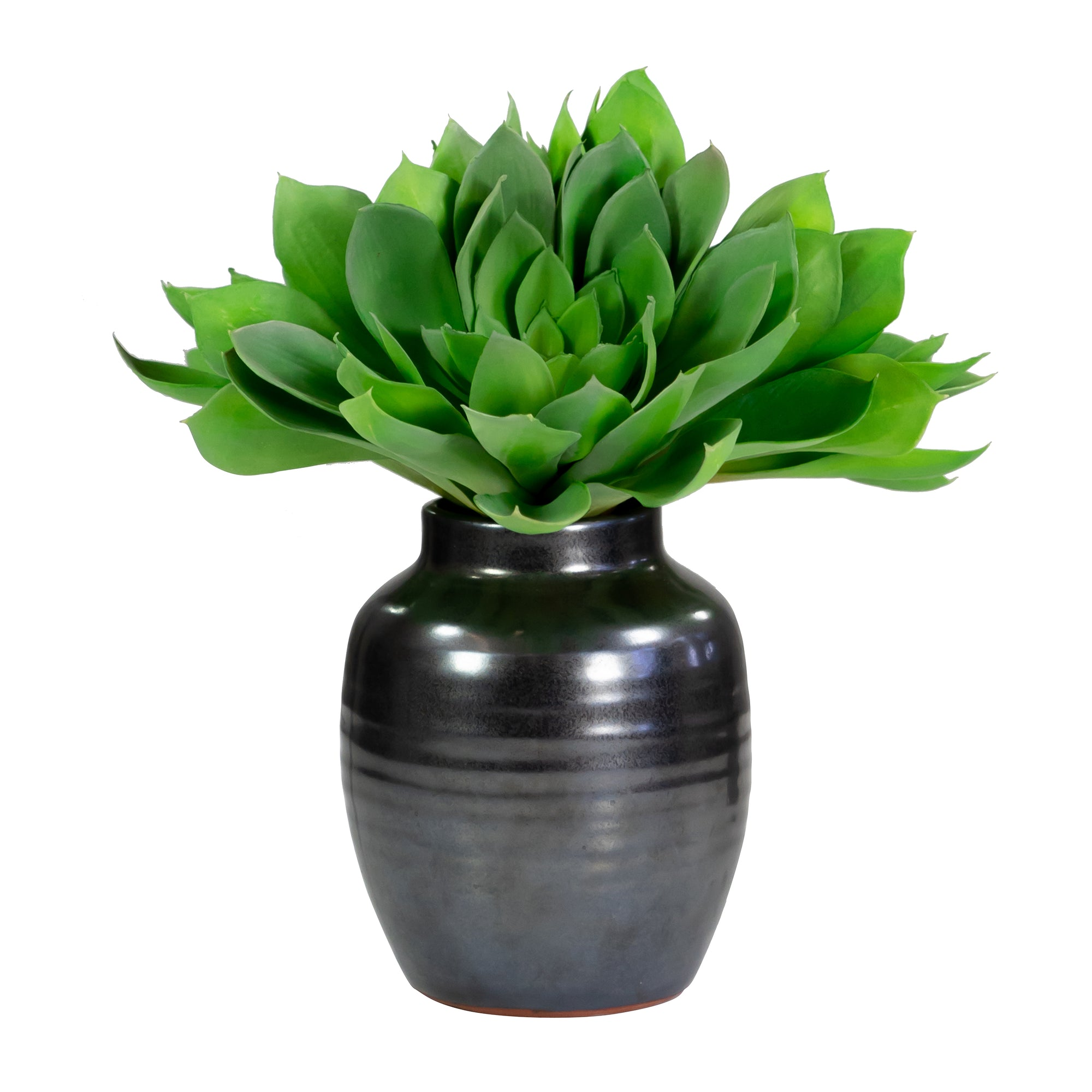 GOURMET LOTUS IN CRETE POT 15""