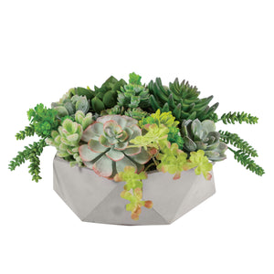 MIX SUCCULENT IN HEXAGON POT 9""
