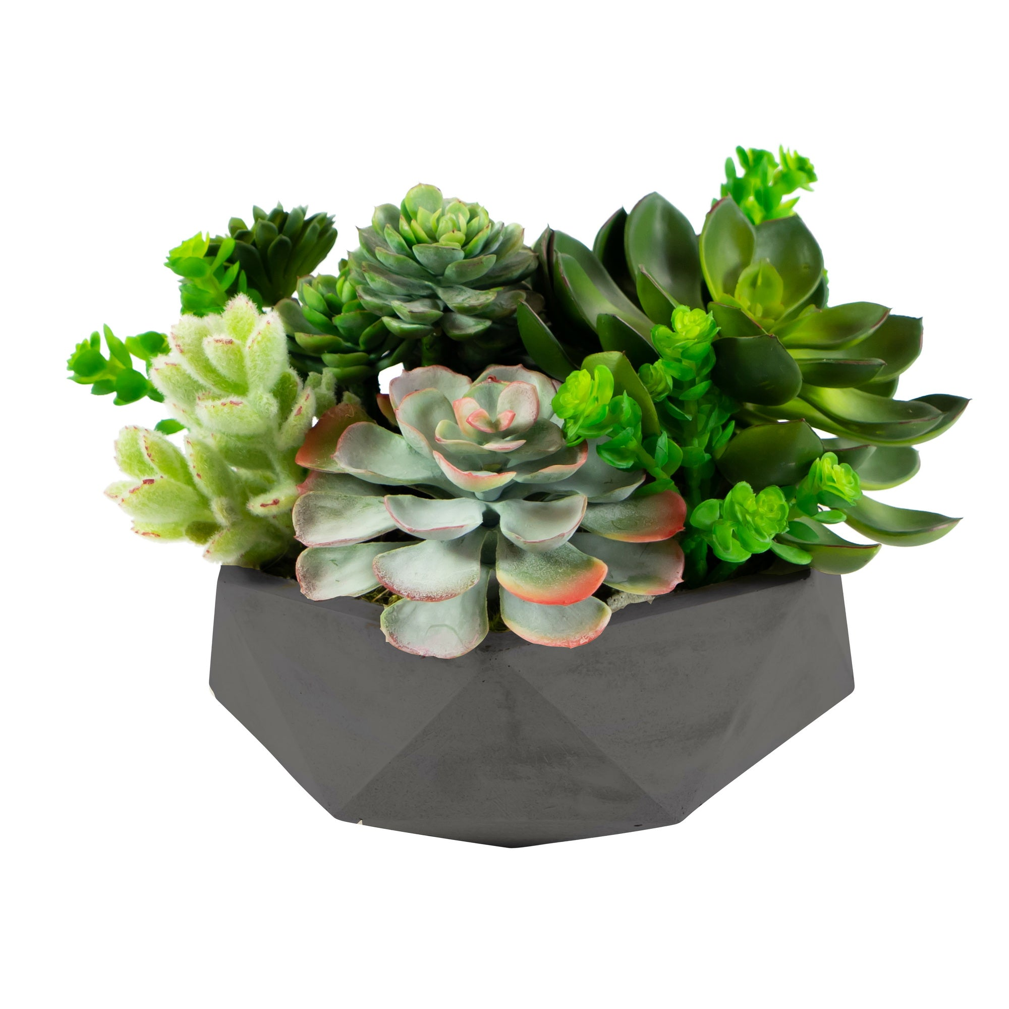 MIX SUCCULENT IN HEXAGON POT 8""