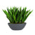 SANSEVIERIA IN OVAL PLANTER 26""