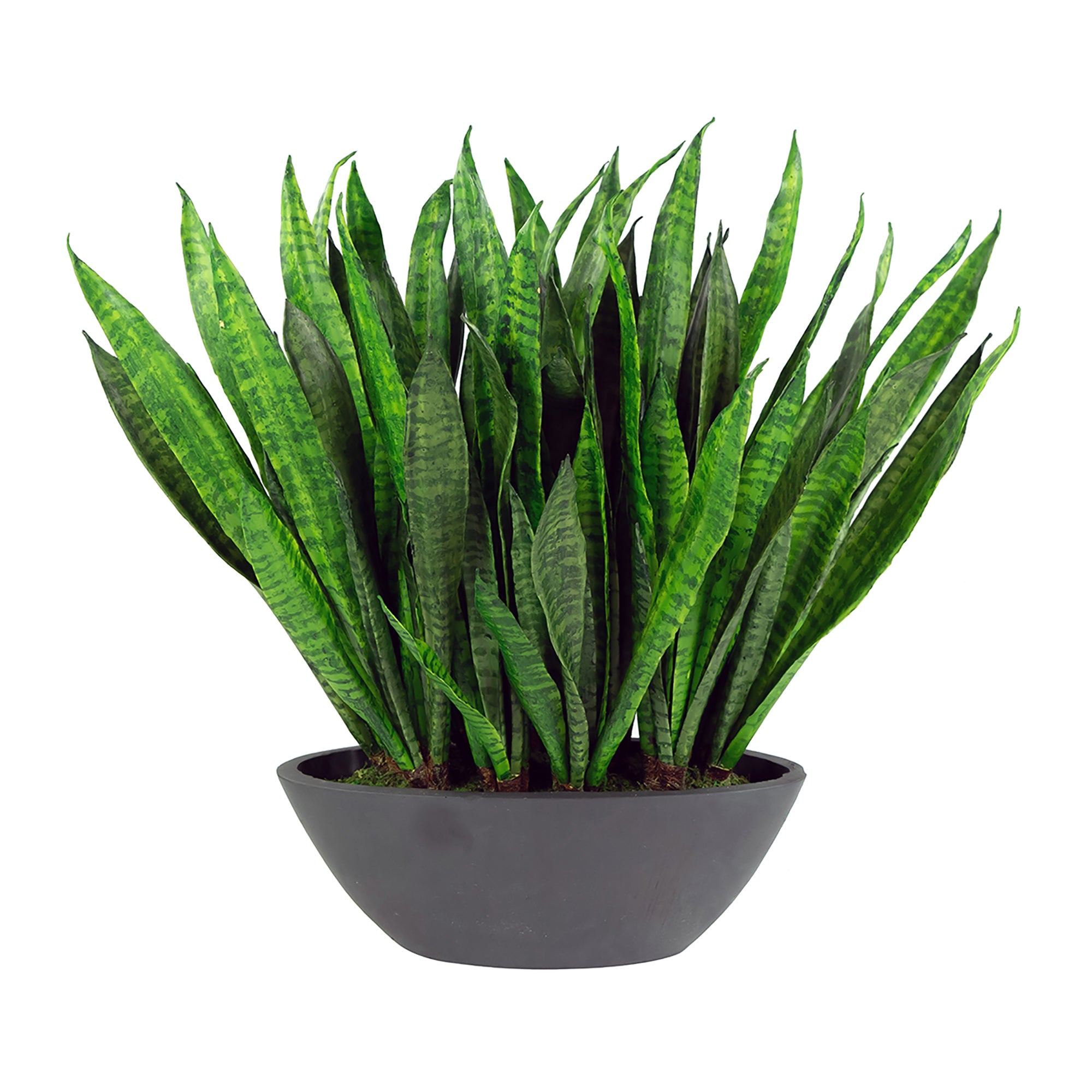 "SANSEVIERIA IN OVAL PLANTER 22"" (WHD292-GR)"