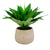 Realistic faux aloe plant in light grey pot