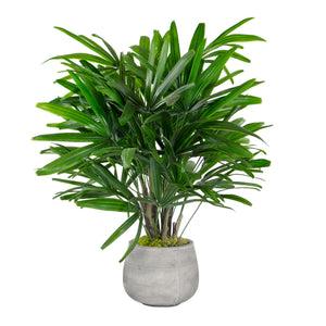 RHAPIS PALM IN STONECAST PLANTER 3'