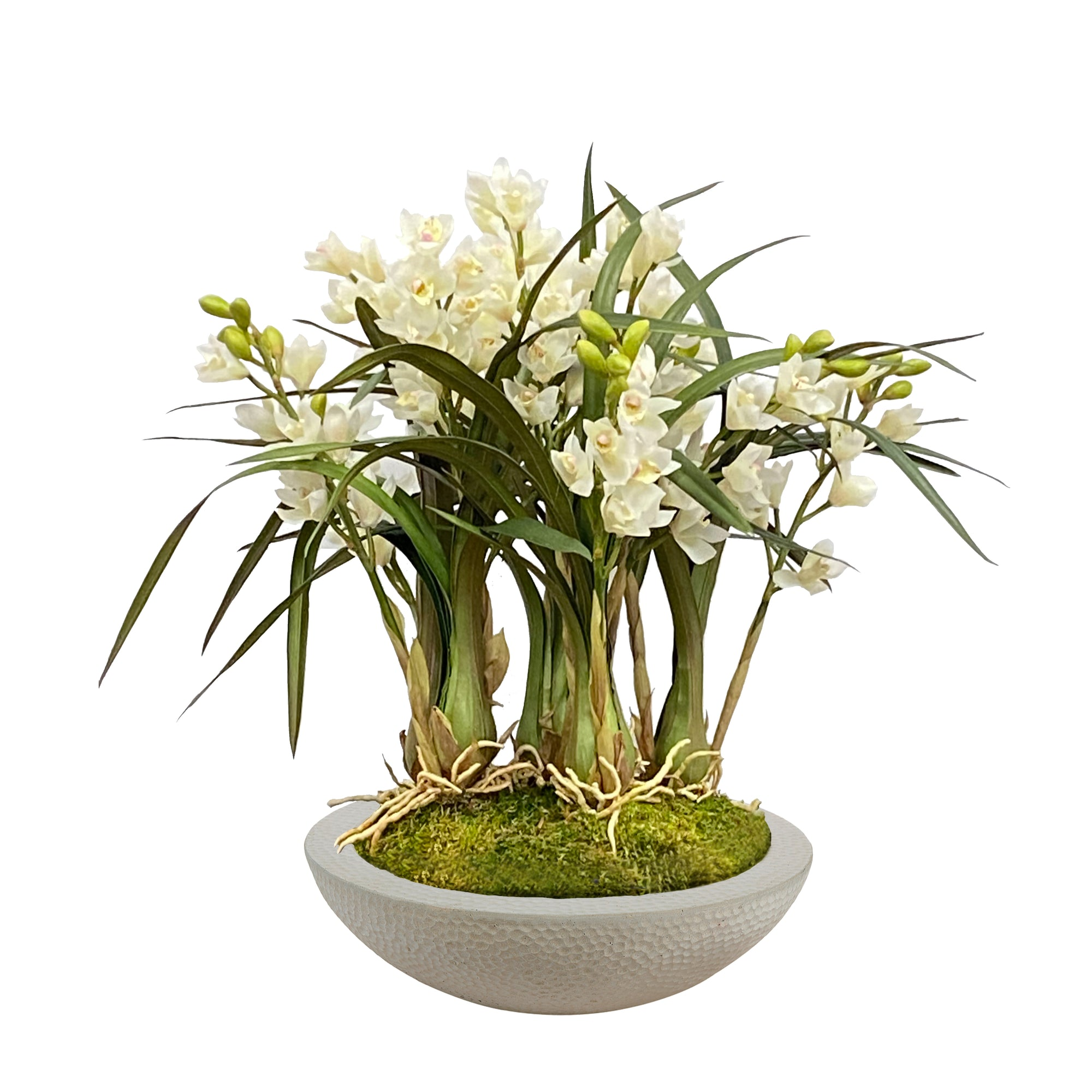 ORCHID CYMBIDIUM IN PLANTER 27""