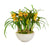 ORCHID CYMBIDIUM IN BOWL (WHD307-YLGR)