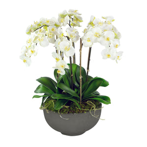 ORCHIDS IN BOWL 28""