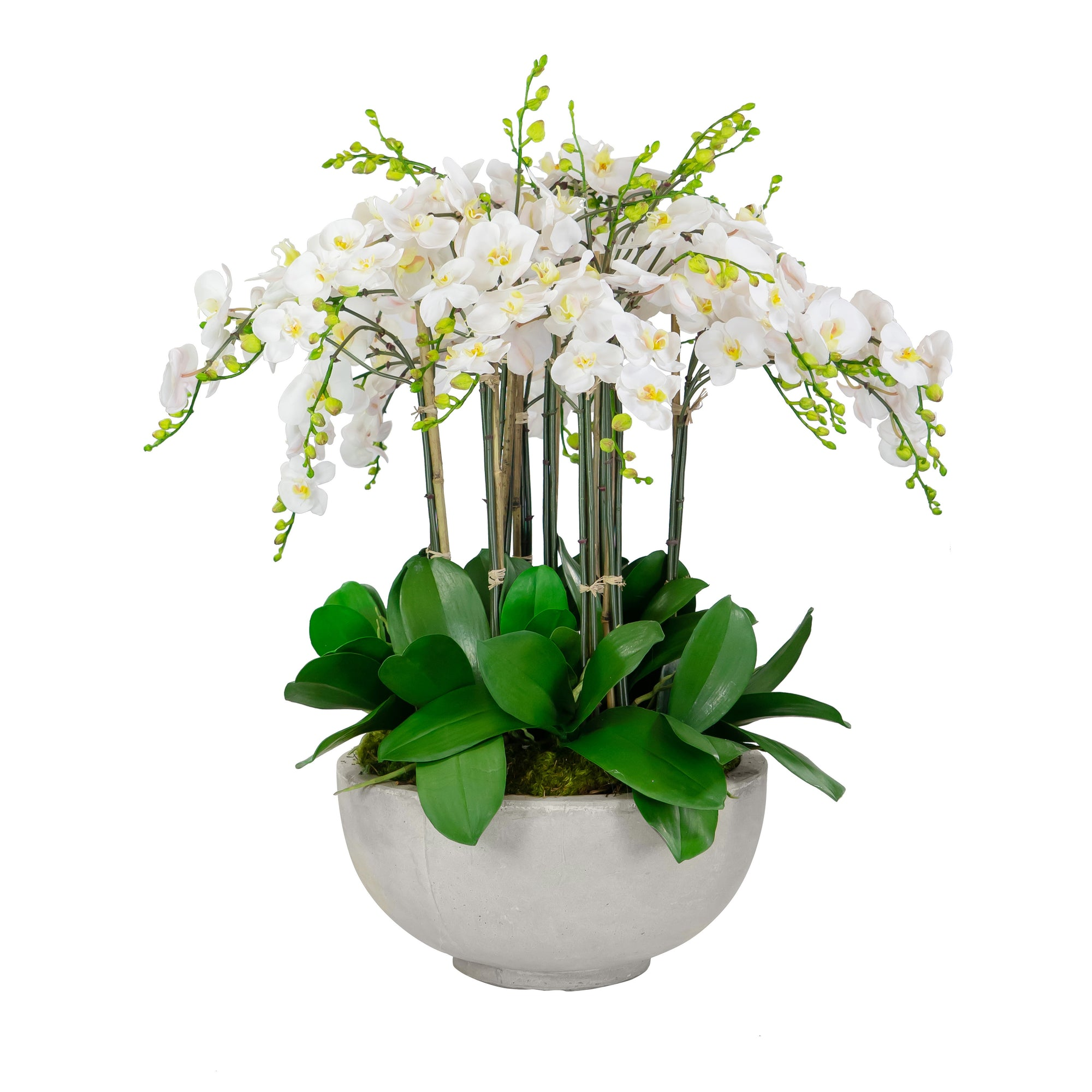 DELUXE ORCHIDS IN BOWL 34""