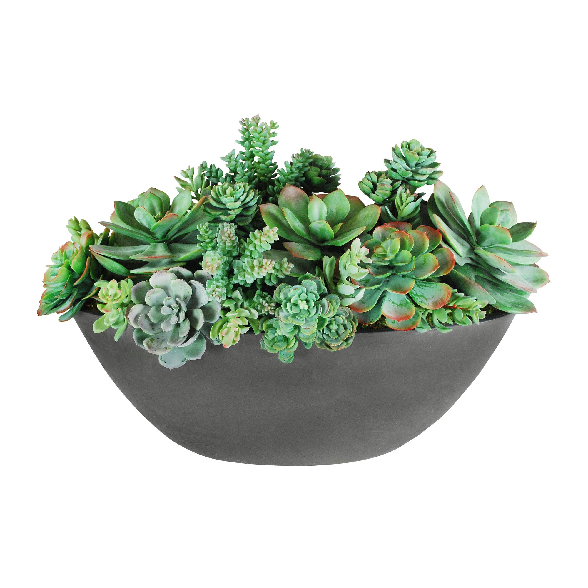 SUCCULENT MIX IN OVAL PLANTER 14""