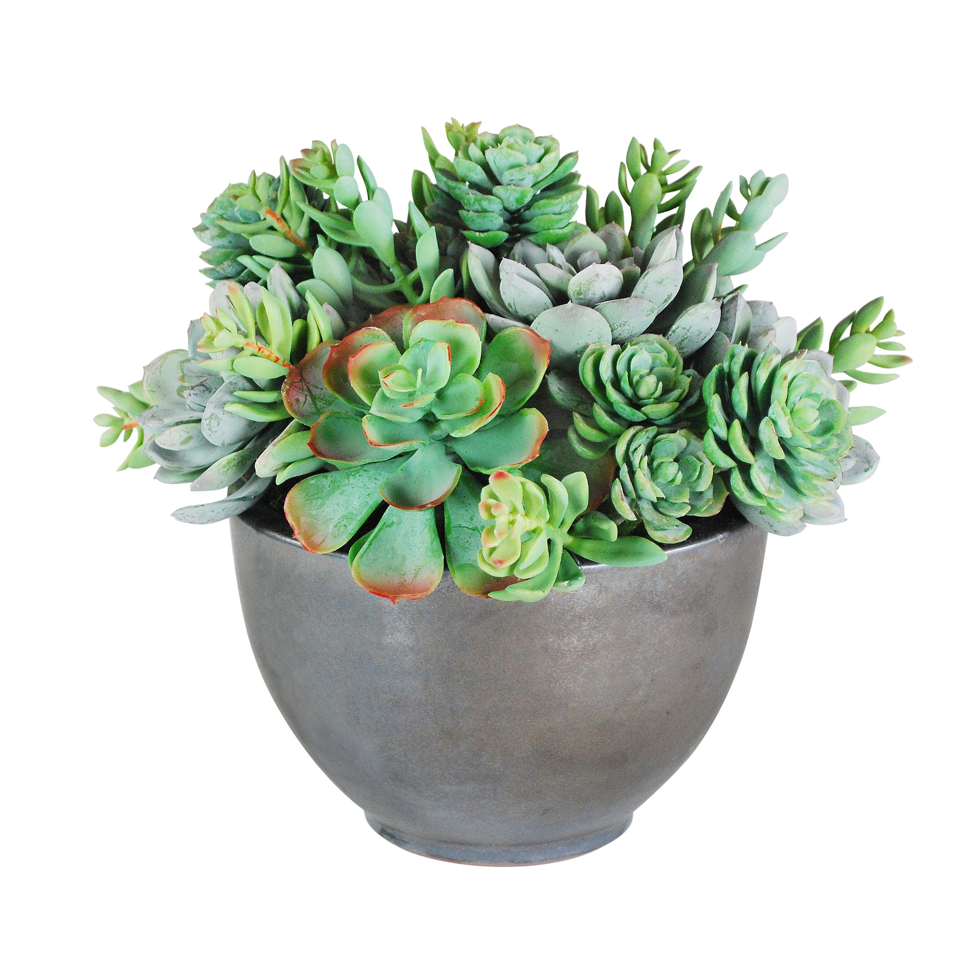 SUCCULENT MIX IN BOWL 11""