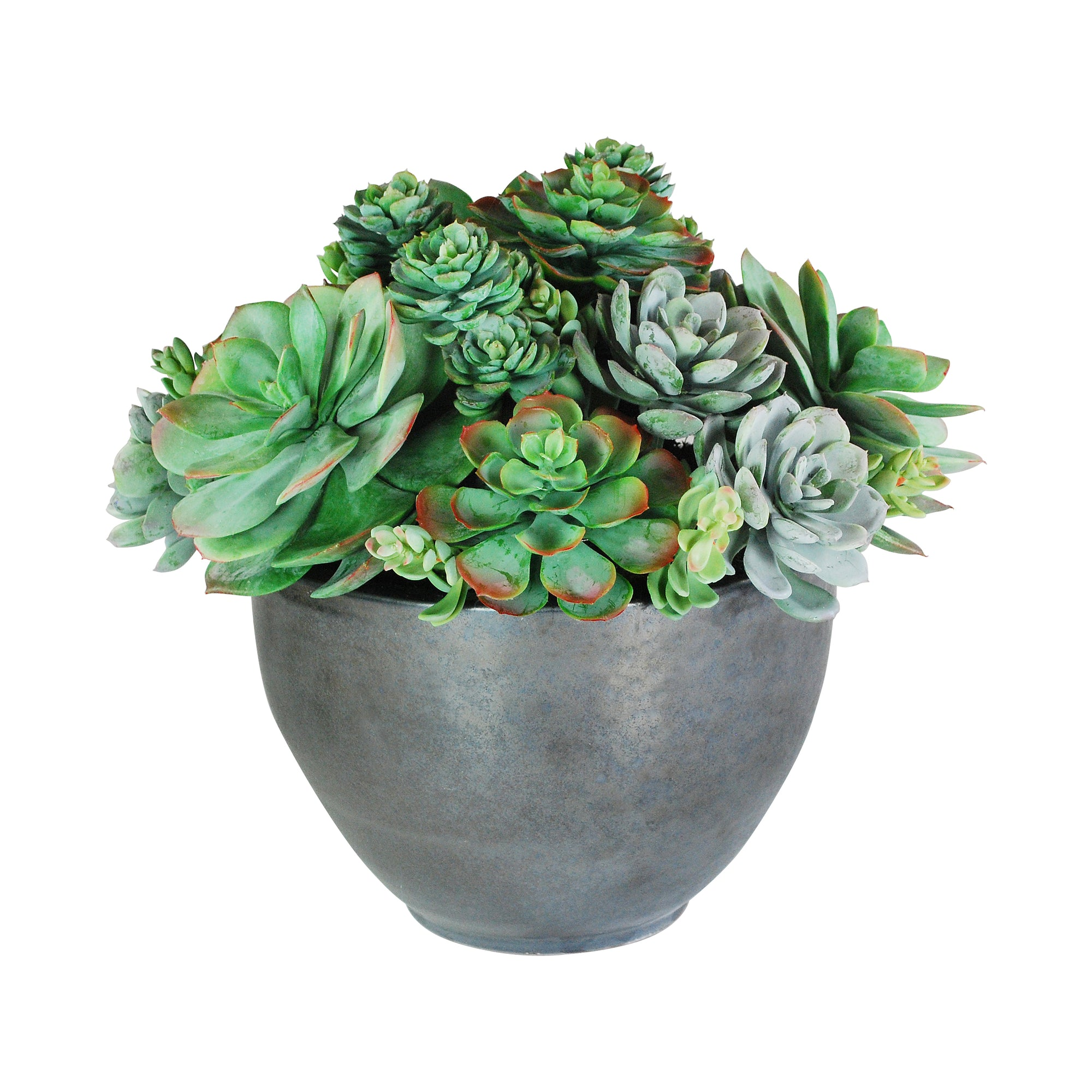 SUCCULENT MIX IN BOWL 16""