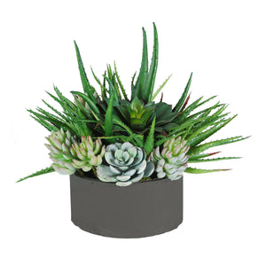 ALOE SUCCULENTS MIX IN TRAY 15""