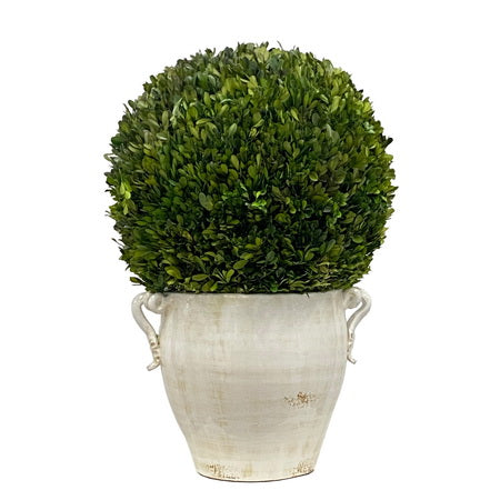 BOXWOOD IN PLANTER 28''