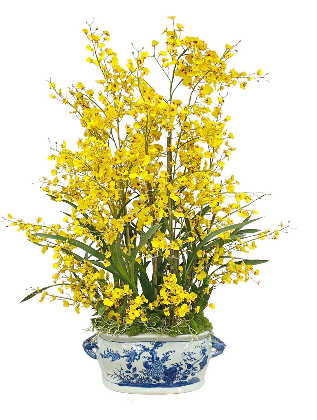 Tall yellow oncidium orchids in Chinese white and blue pot