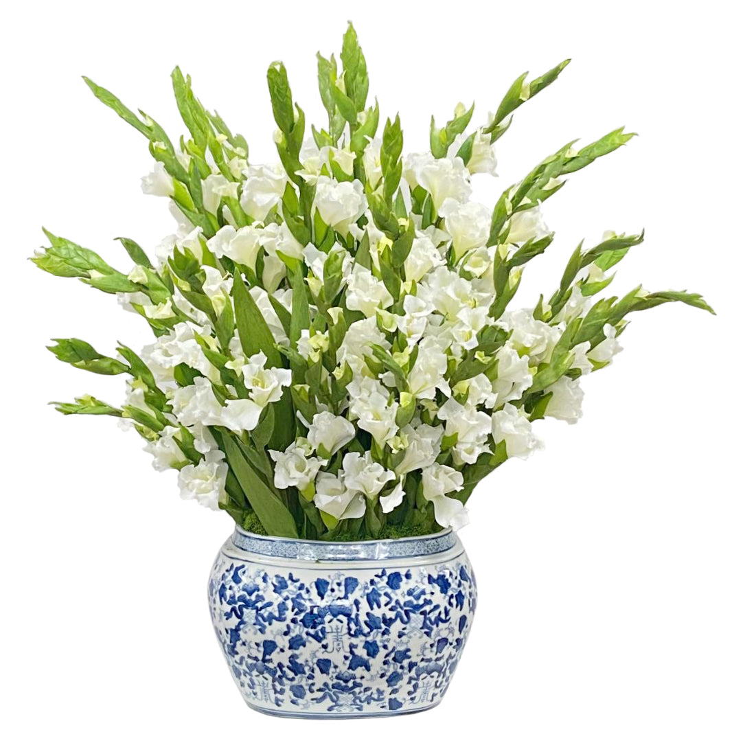 White-gladiolus-in-chinese-white-and-blue-porcelain-planter