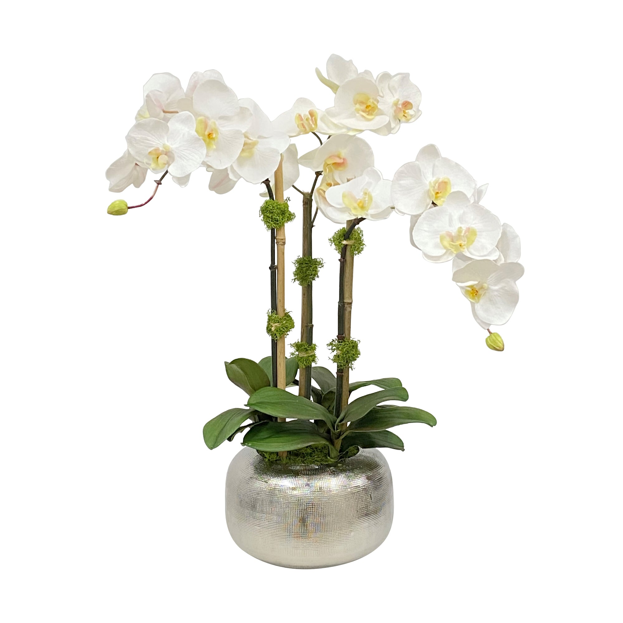 ORCHID IN ARTISANAL POT 22""