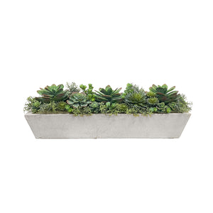 Mixed succulents in a contemporary long trough planter, light grey