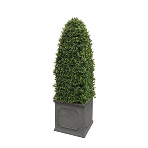 BULLET BOXWOOD IN SQUARE PLANTER 4.5'