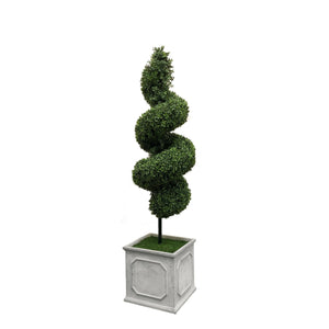 SPIRAL BOXWOOD IN SQUARE PLANTER 5'