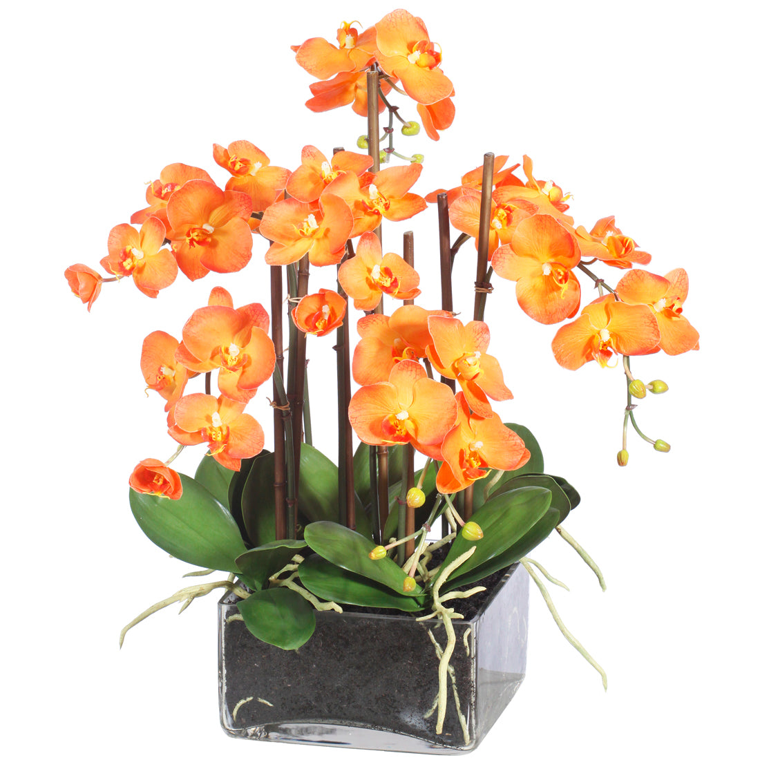 PHALAENOPSIS IN SQUARE GLASS (WHP91055-OR)