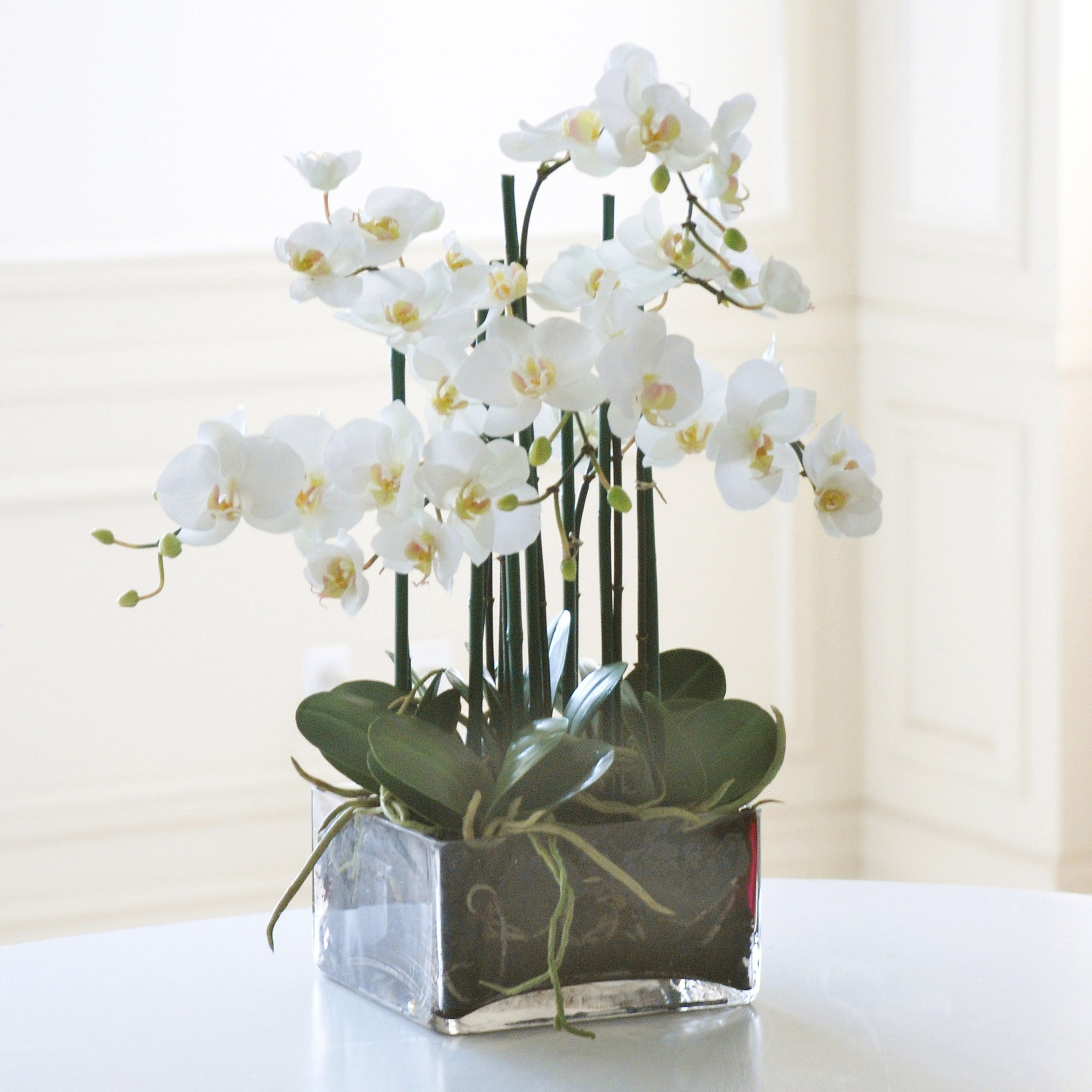 PHALAENOPSIS IN SQUARE GLASS (WHP91055-WH) - Winward Home silk flower arrangements