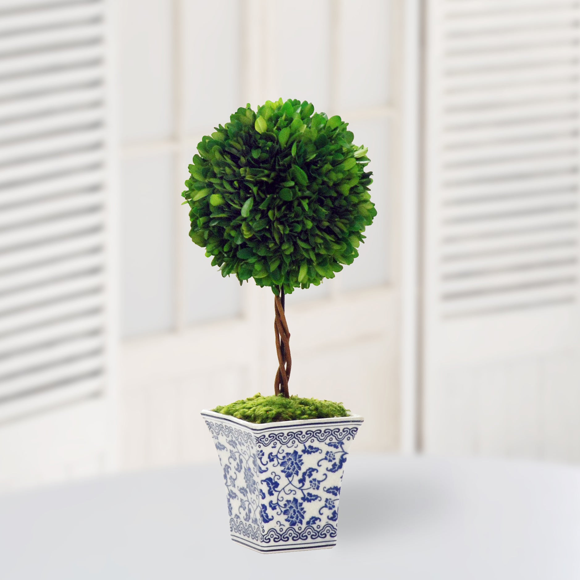 Single ball preserved boxwood topiary in chinoiserie pot
