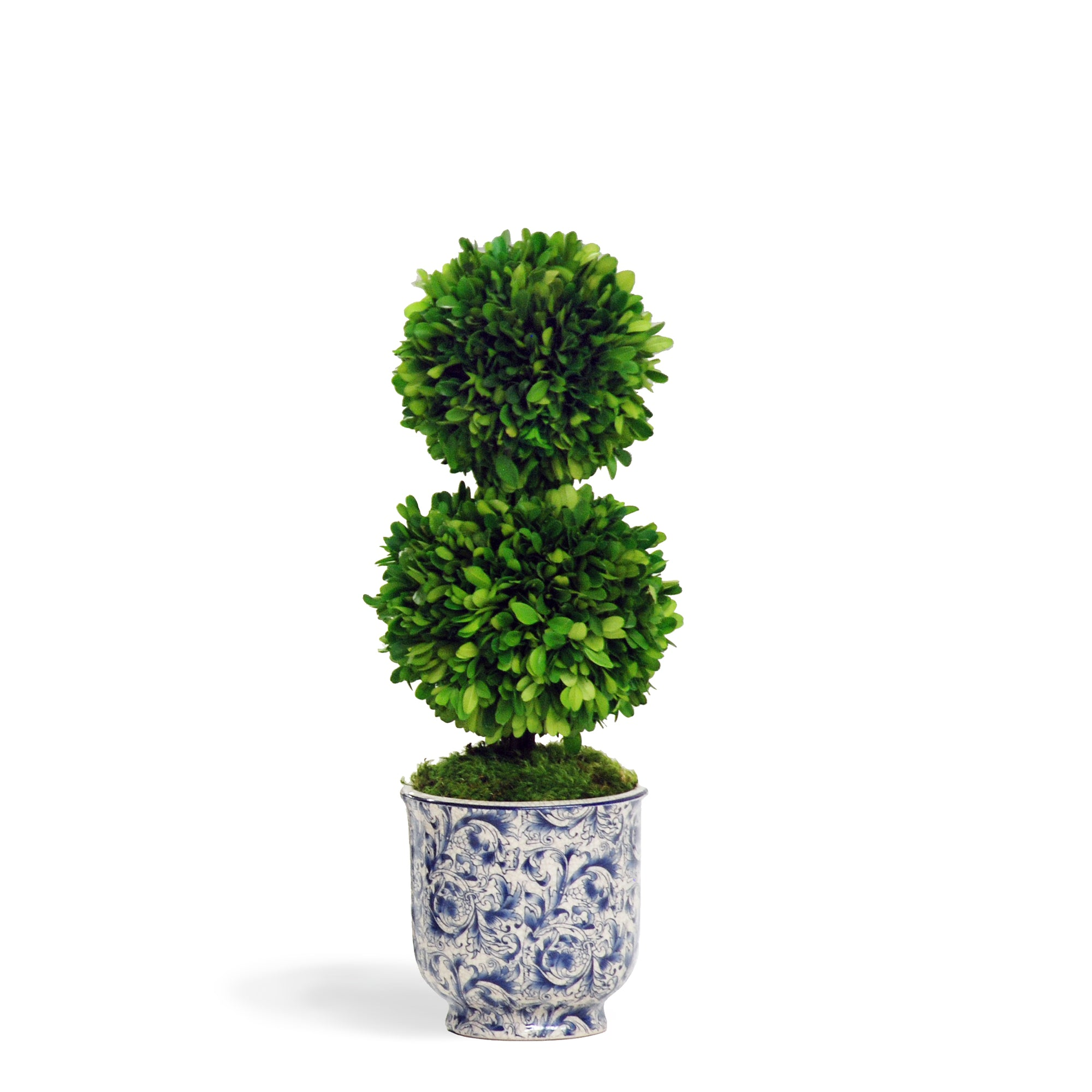 Preserved double boxwood ball in chinoiserie pot