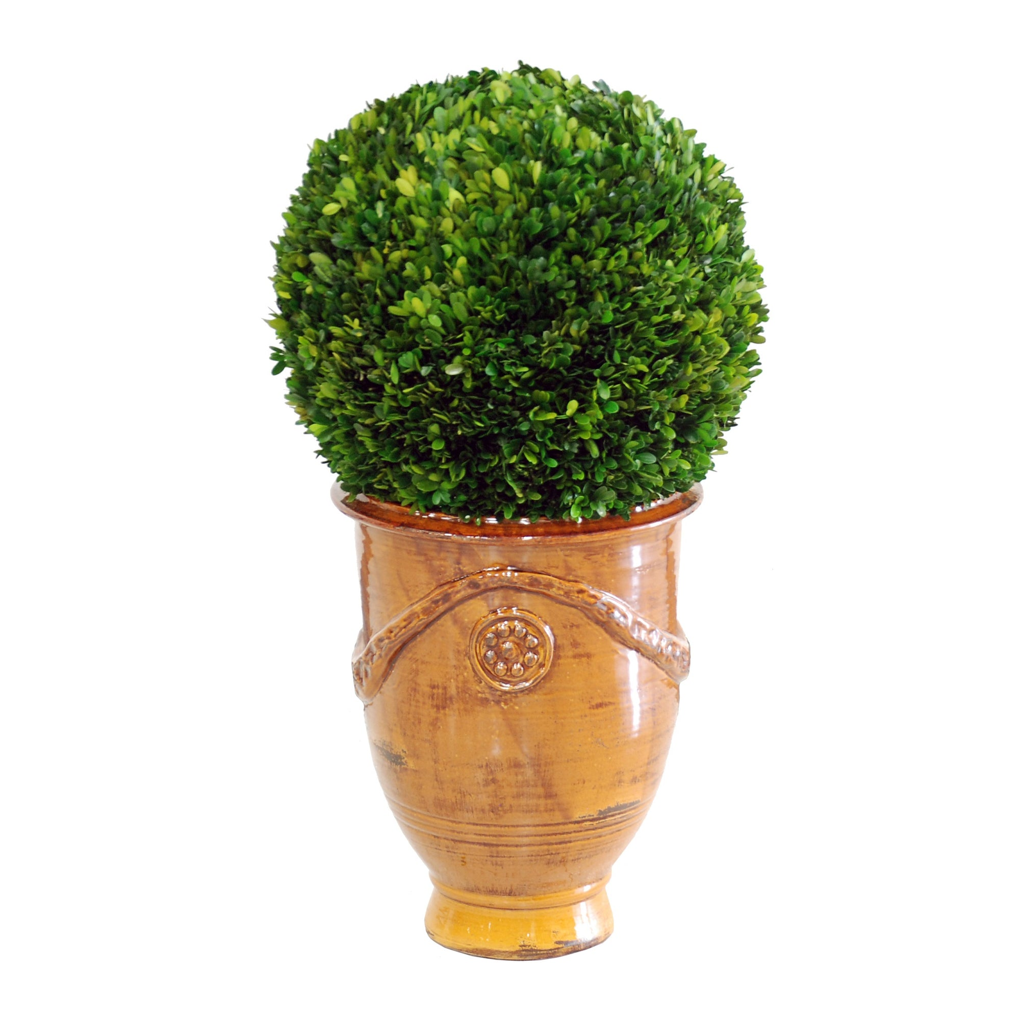 Preserved boxwood in brown tuscan urn