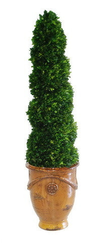 BOXWOOD SPIRAL IN TUSCAN URN (WHPG3144-CF) - Winward Home silk flower arrangements